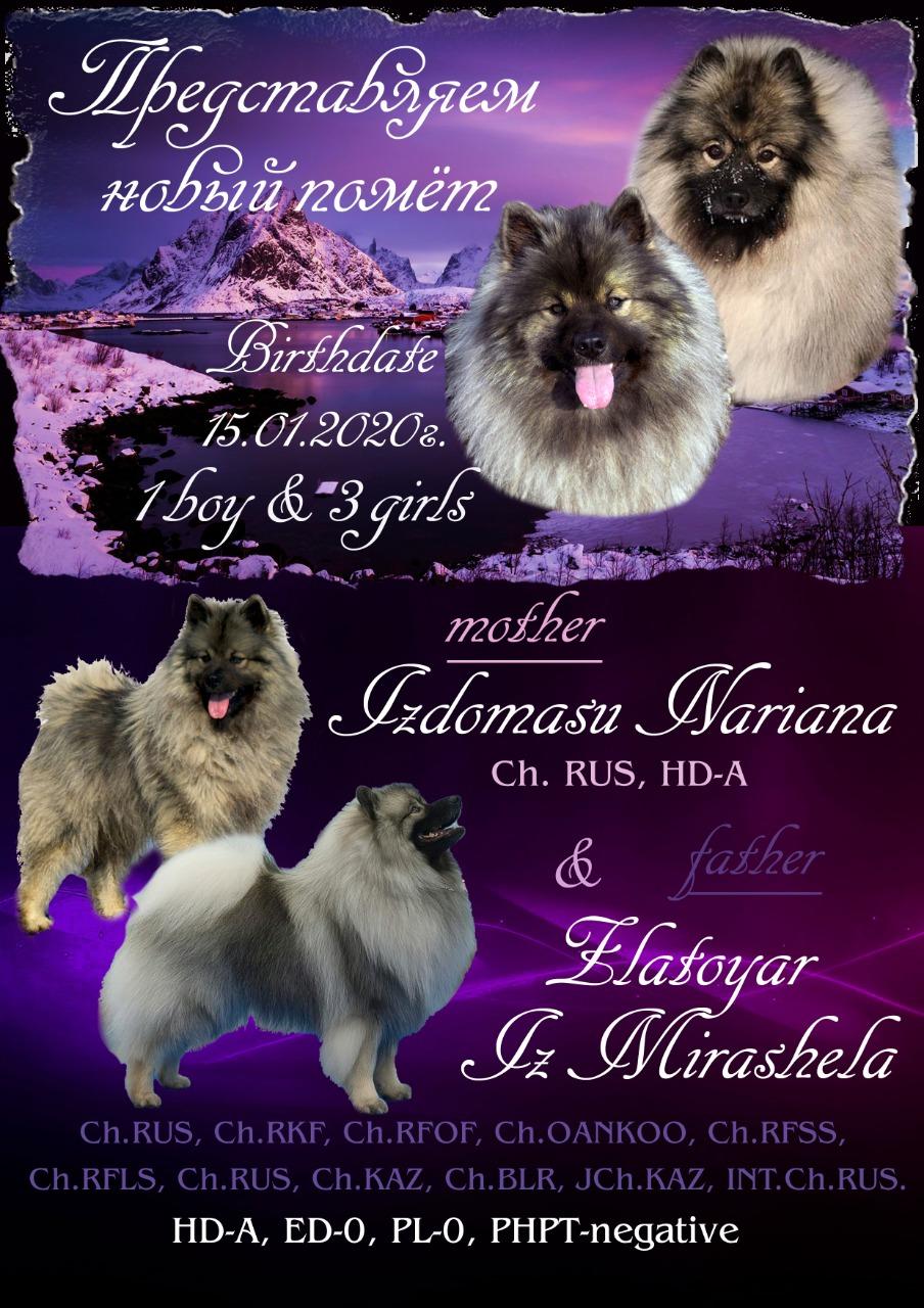 Для бронирования предлагаются шикарные щенки Немецкого ВольфШпиц Кеесхонда!