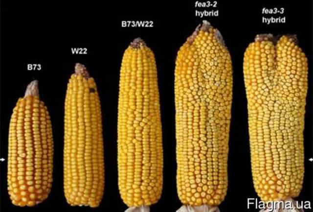 Семена Сои, Кукурузы, Подсолнуха, Рапса, Пшеницы