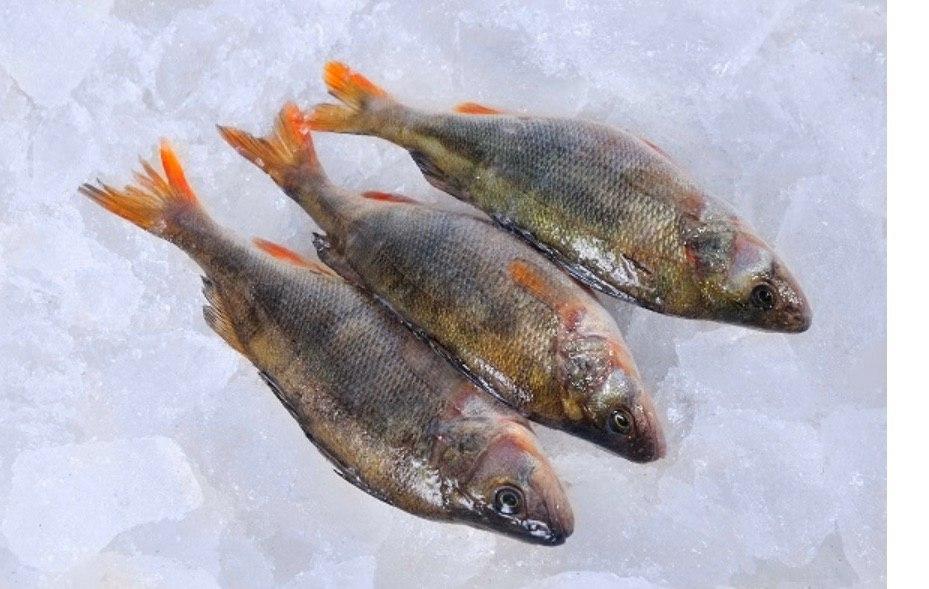 Продажа свежевыловленной рыбы оптом
