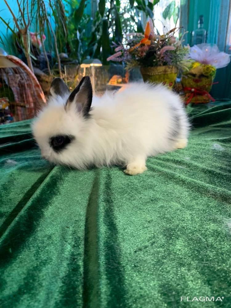 Декоративные, чистокровные крольчата разных пород !!!1