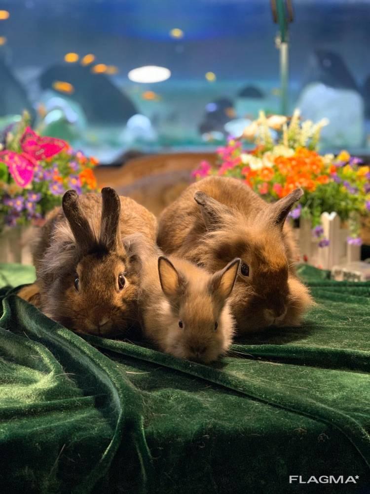 Декоративные, чистокровные крольчата разных пород !!!2