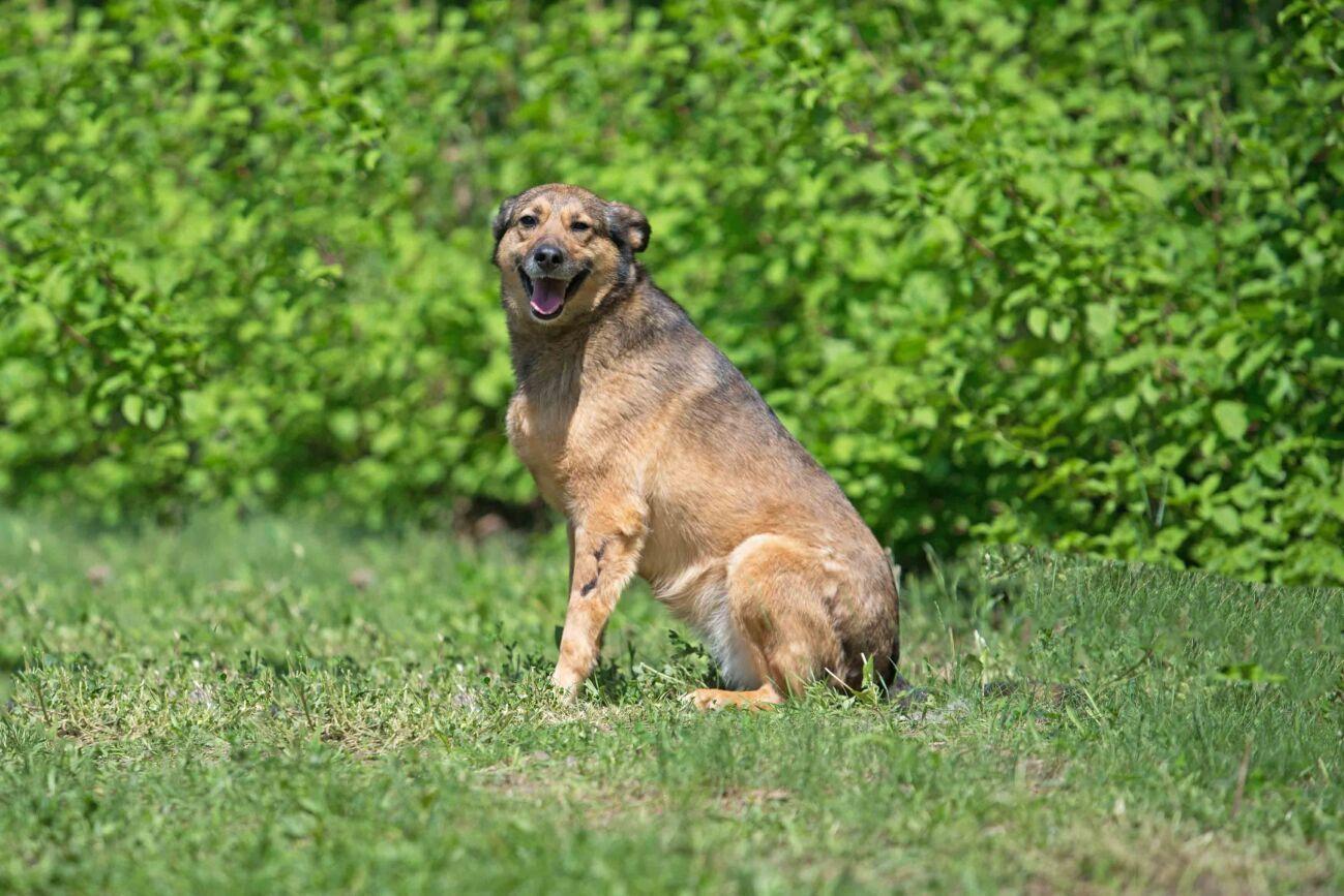 Ницца, отдам в хорошие руки позитивную собаку