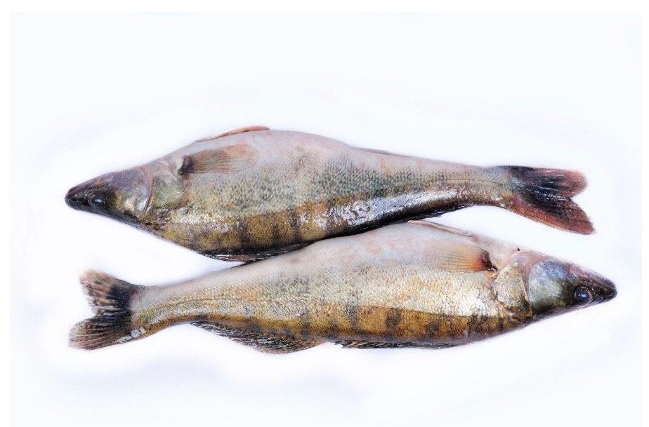 Свіжовиловлена риба оптом. Ікряна риба
