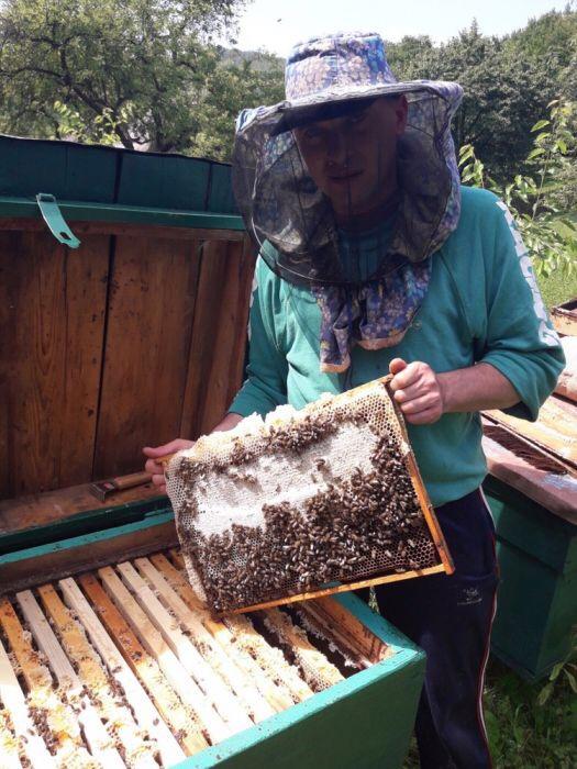 Пчеломатки карпатка. Бджоломатки карпатка2