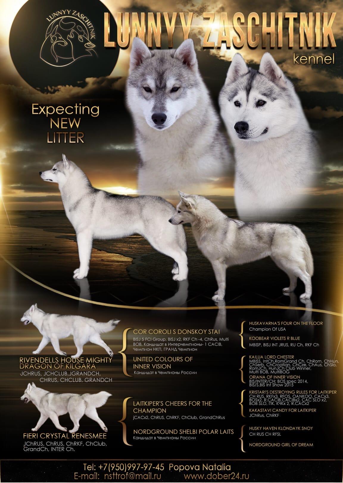 Продаются шикарные щенки Сибирский Хаски