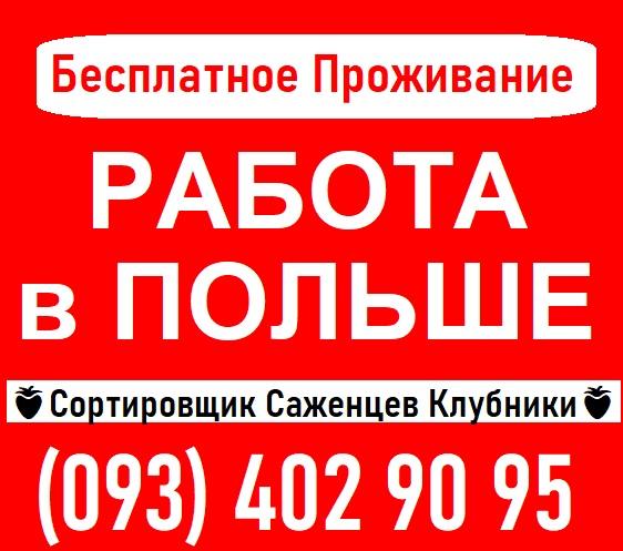 ⭕ Требуются СОРТИРОВЩИКИ Саженцев Клубники ПОЛЬША