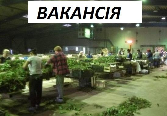 Пропонуємо роботу На Полуниці у Польщі