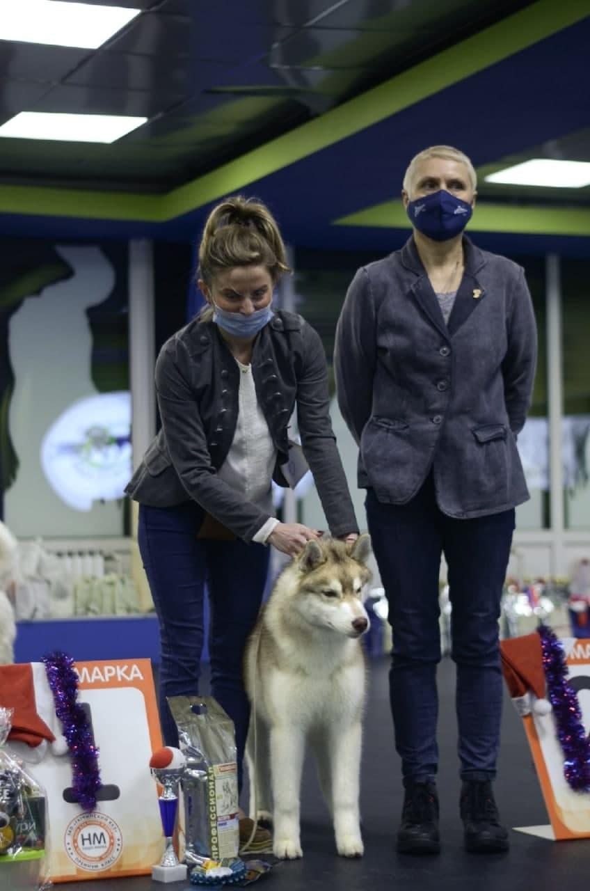 Продаются подрощенные щенки Сибирский Хаски. 2 супер кобеля и обаятельная девочка!