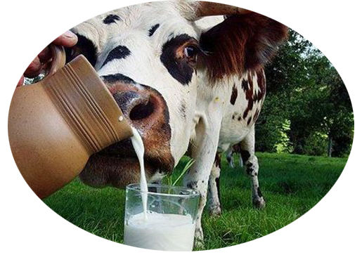 Комплекс  домішок для сільськогосподарських кормів.