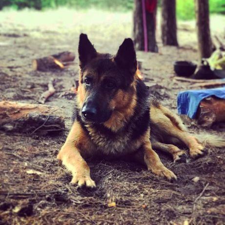 Дрессировка и воспитание любой собаки
