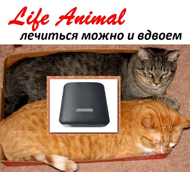Лечение домашних животных Life Animal. Удобно и эффективно.